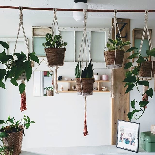 Hanging in there. How about you? . . . #diyhomedecor #diyblogger  #linkinbio #homedecorblogger #doityourself #makeit #buildit #indoorplants #diyhomeprojects #diyhomeimprovement #hangingplants #macramé #macramehangingplanter #avocadodye #naturaldye #copperpipediy #gallerywallgoals  #gallerywall